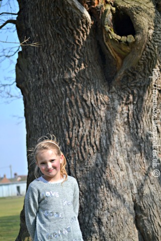 An old oak tree @ ups and downs, smiles and frowns