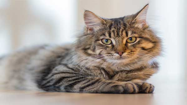 Signs of Common Cat Health Problems