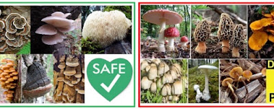 Mushrooms For Dogs, Cats – Safe Editable Medicinal and Unsafe, Poisonous