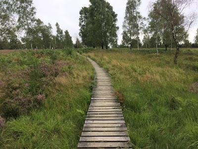 Eine Heidelandschaft mit vereinzelten Bäumen. Inmitten verläuft ein Steg