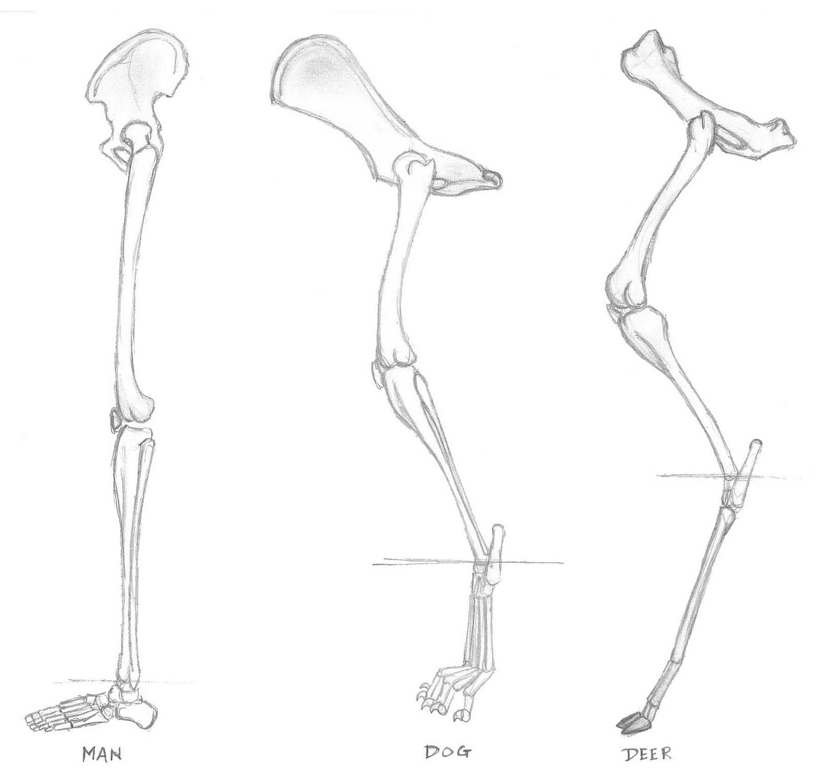 Deer Bones Diagram