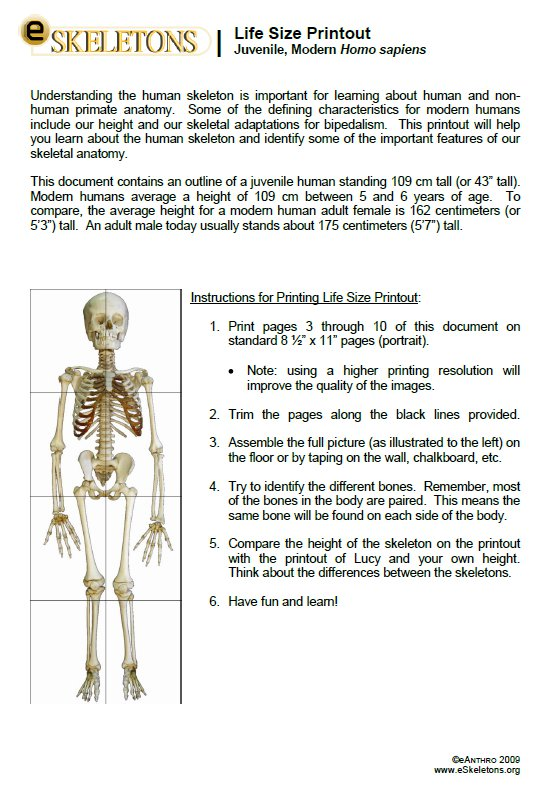 Teaching Skeletal Anatomy To Kids