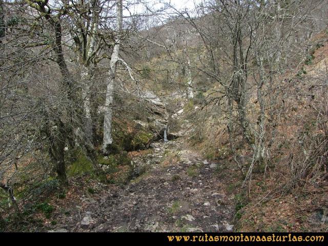 Ruta Puente Vidosa, Jucantu: Zona boscosa en Riega Lasprón