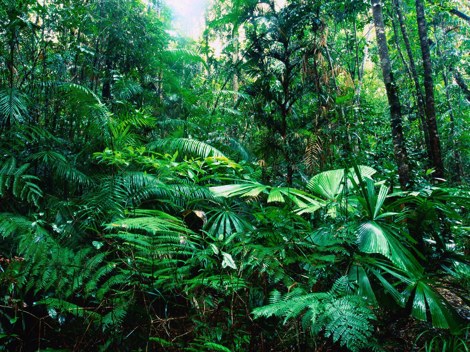 Chain Rainforest Biome Food Tropical