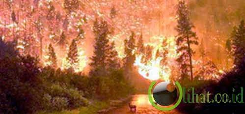 Kebakaran Hutan Nasional Bitterroot