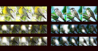 Microsoft Deep Learning AI with Attentional Generative Adversarial Network (AttnGAN)