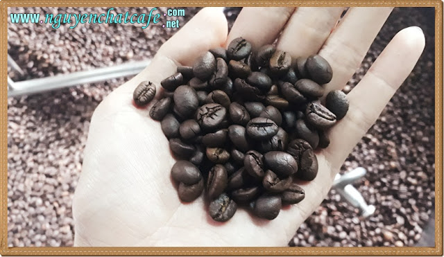 Rang cà phê - từ đam mê thành nghệ thuật