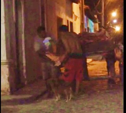 Denúncia em Brejo! Carne bovina é trasportada em carroça, do matadouro aos frigoríficos e mercado.