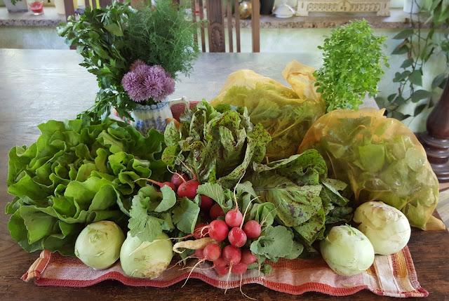 Salate, Kräuter, Radieschen, Kohlrabi