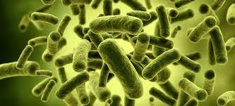 Mengenal Bakteri Baik di Dalam Tubuh Kita