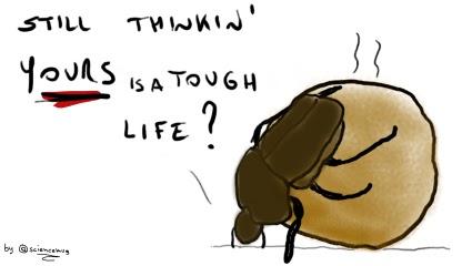 Disegno di uno scarabeo stercorario mentre spinge la sua sfera di sterco