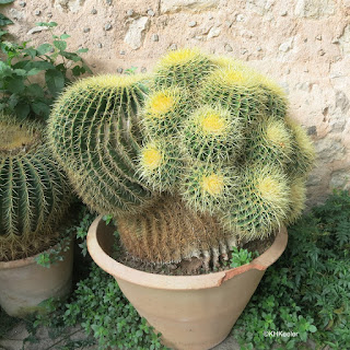 cactus, Majorca