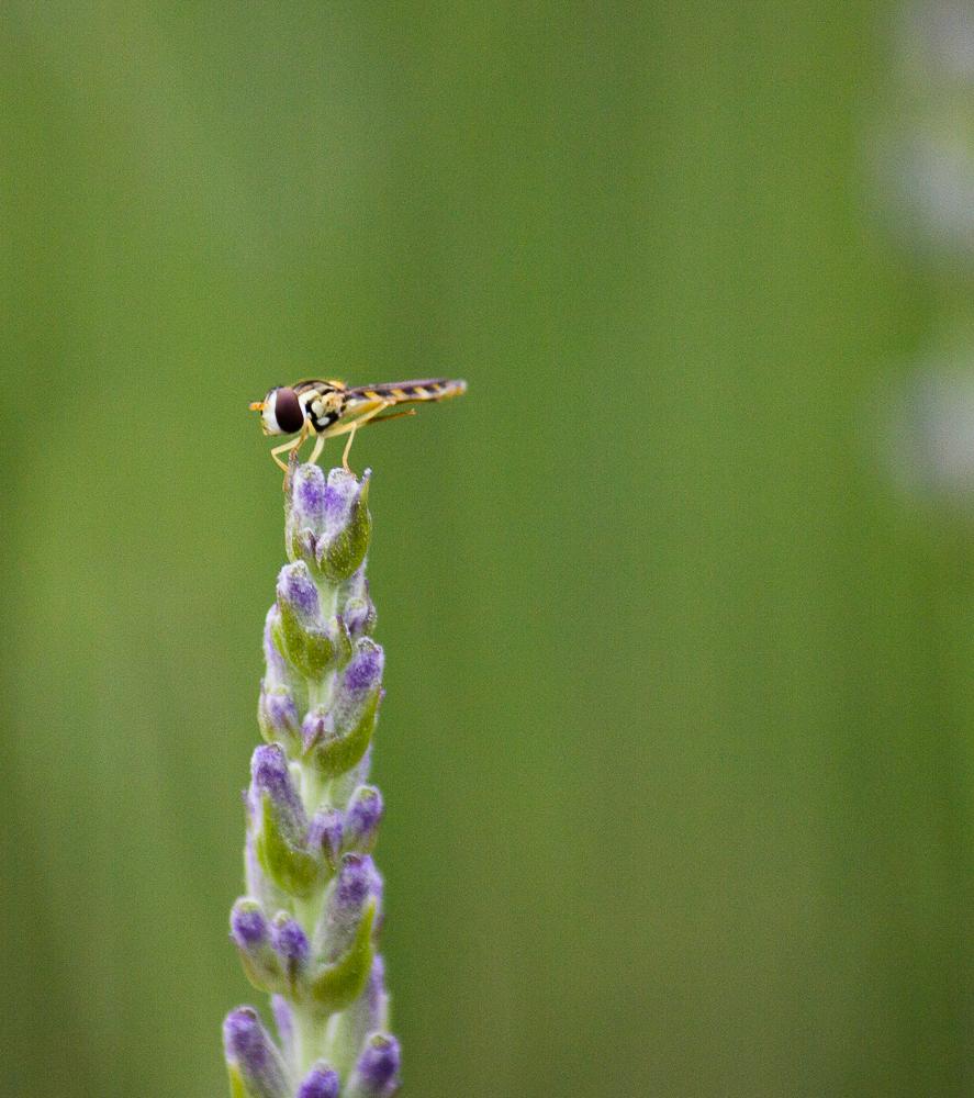 clin d 39 oeil les insectes du jardin. Black Bedroom Furniture Sets. Home Design Ideas