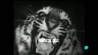 Fotograma de RTVE, La 2, del programa de Félix Rodríguez de la Fuente, Planeta azul. El fotograma muestra a un tigre que muestra sus fauces. En blanco y negro