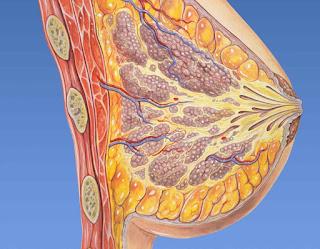 Ingurgitación de las mamas: Síntomas y Tratamientos
