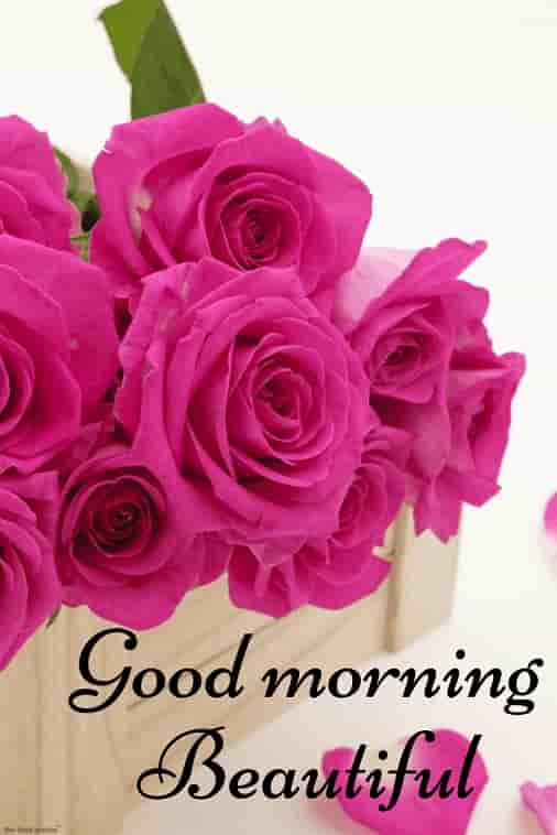 good morning beautiful picture with roses in wooden box