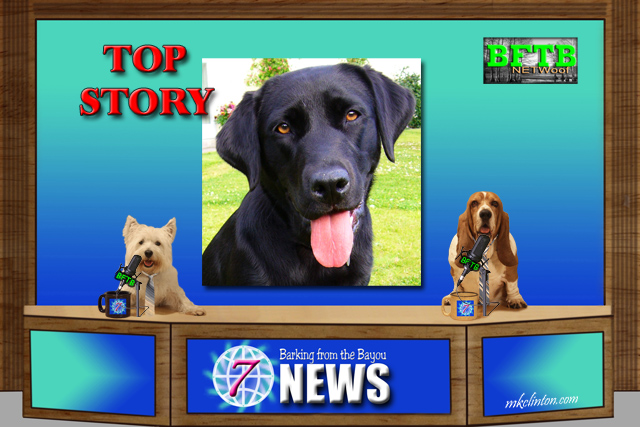 BFTB NETWoof News Top story with black Lab