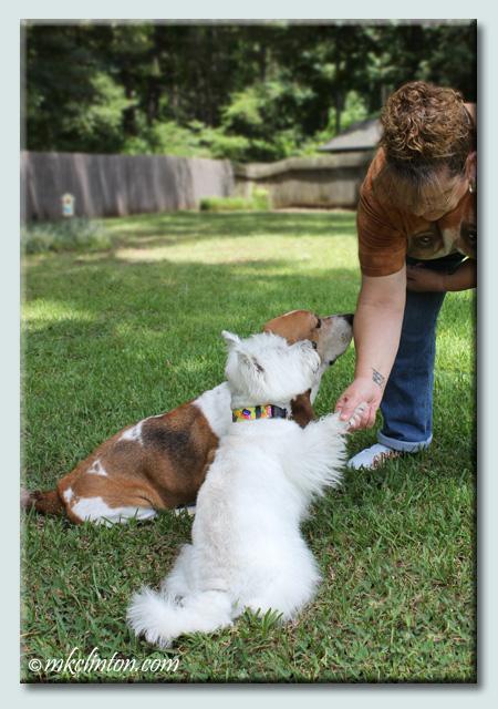 Westie shaking paws with Basset Hound in backgound