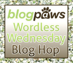http://blogpaws.com/executive-blog/pet-parenting-health-lifestyle/wordless-wednesday/wordless-wednesday-blog-hop-craft-for-your-pet-shelter/
