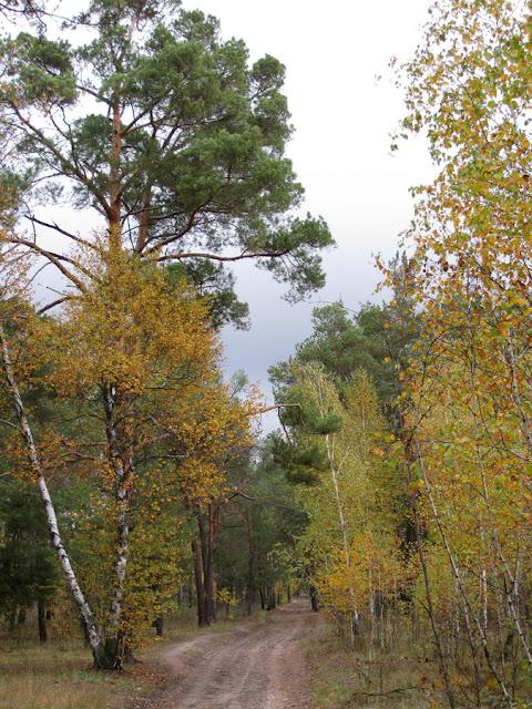 Фото Виталия Бабенко: лесная дорога осенью