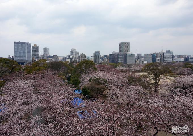 Sakura 2016, Fukuoka