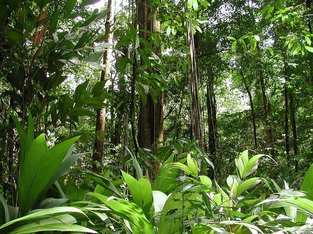نباتات تعيش في الغابة