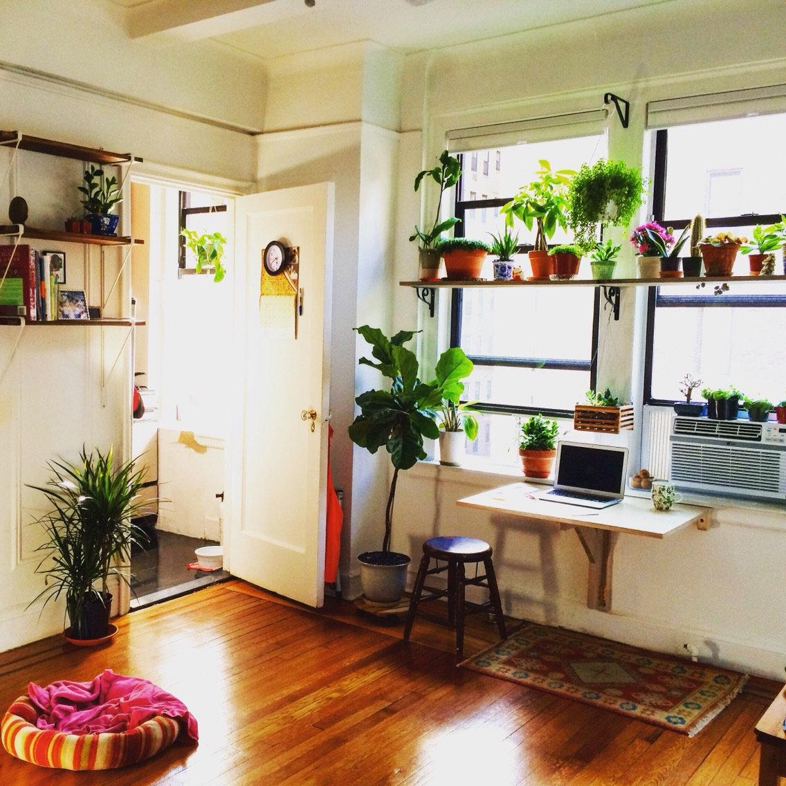 thiết kế nội thất chung cư mini không thể thiếu cây xanh
