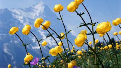 Bình An Nội Tâm - Cân Bằng Cuộc Sống Wildflower