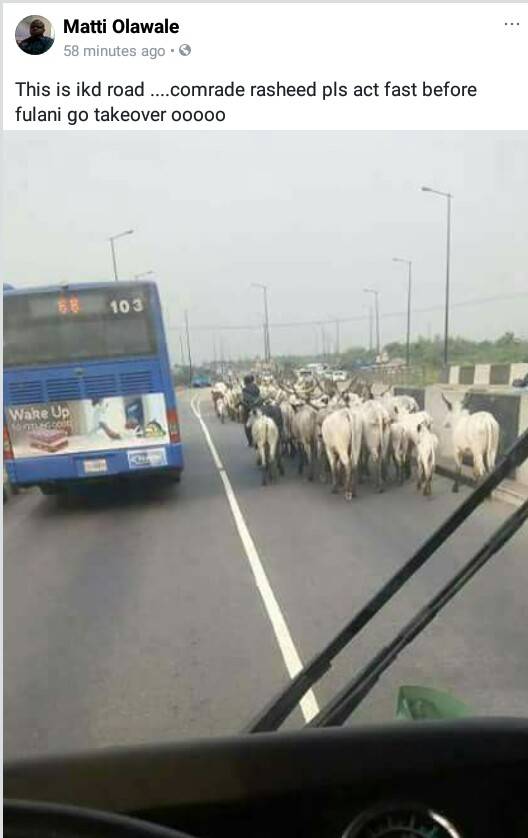 Photo: Herd of cattle take over one side of Ikorodu Road
