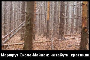 Незабутні лісові краєвиди