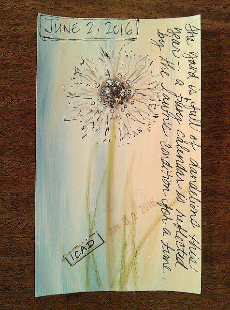 Card #10 Dandelion puff from our lawn, watecolor pencils and pens on gesso coated index card, Christy Sheeler Artist, ICAD 2016, Index Card A Day