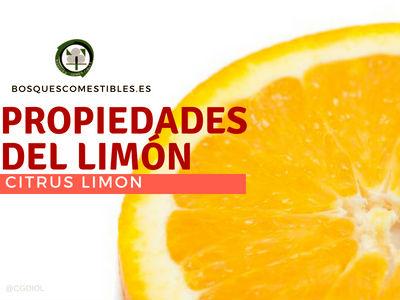 Las Propiedades de Limón: Excelente antiscorbútico,es refrescante y diurético