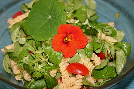 Blüten und Blätter der Kapuzinerkresse im bunten Salat
