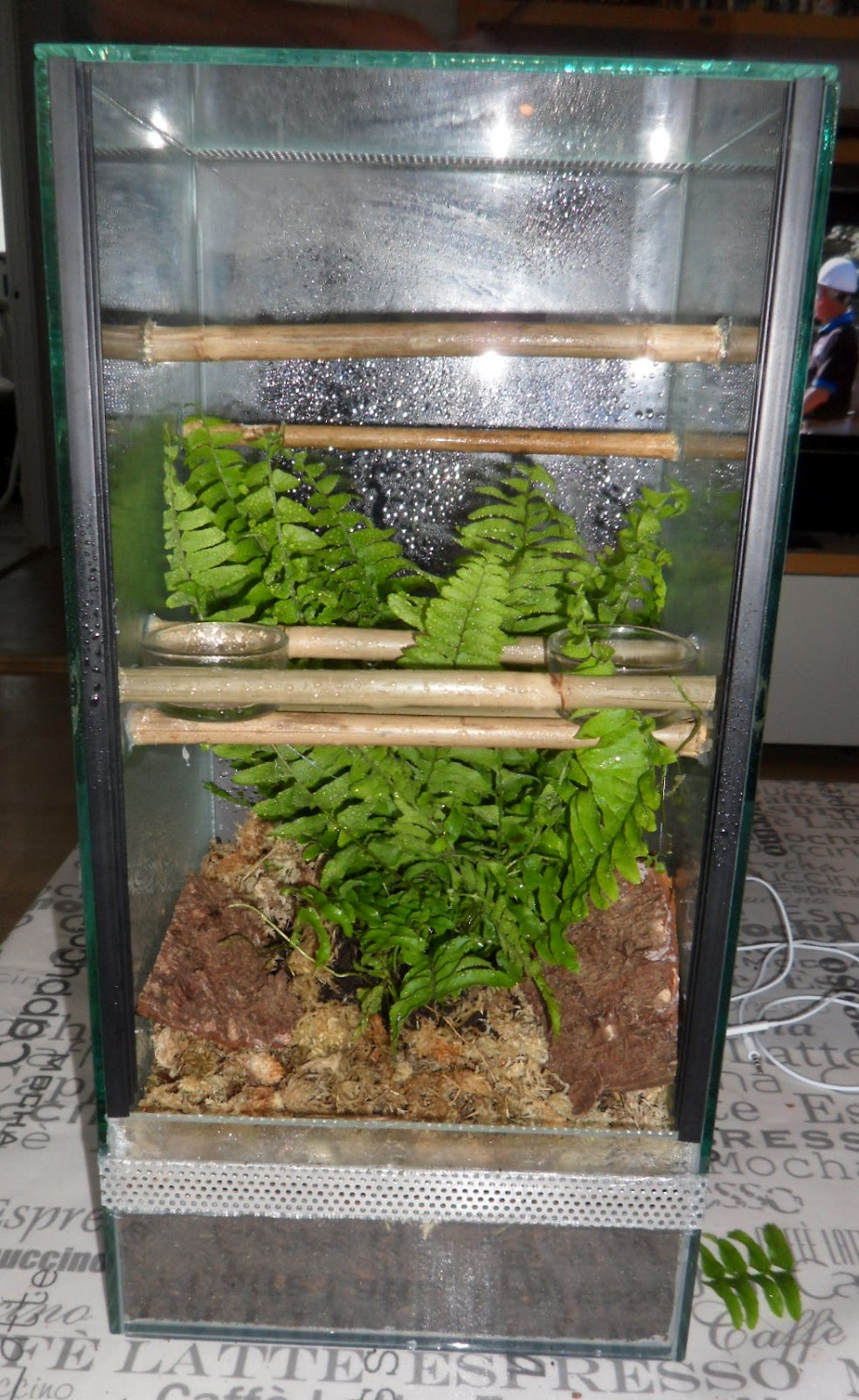 snow leos crested gecko terrarium. Black Bedroom Furniture Sets. Home Design Ideas