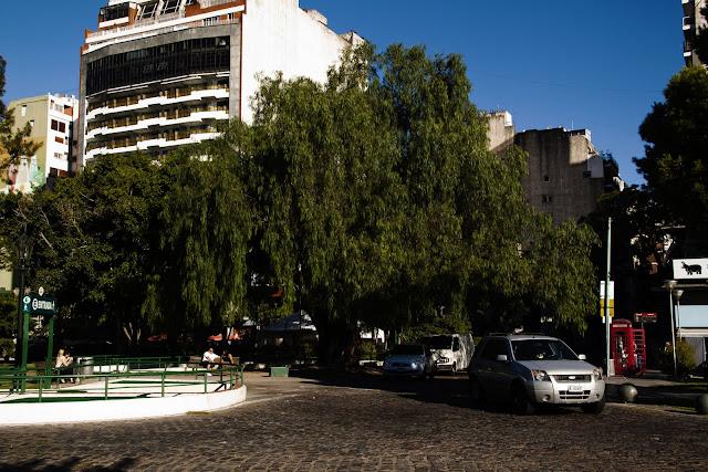 Paisaje urbano.Sauce y gente al sol