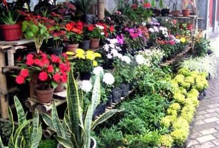Perencanaan Peluang Usaha Pertanian Menguntungkan