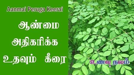 Male Impotence Natural Remedies   Moringa Leaf Benefits
