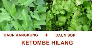 daun kangkung bermanfaat untuk mengatasi ketombe