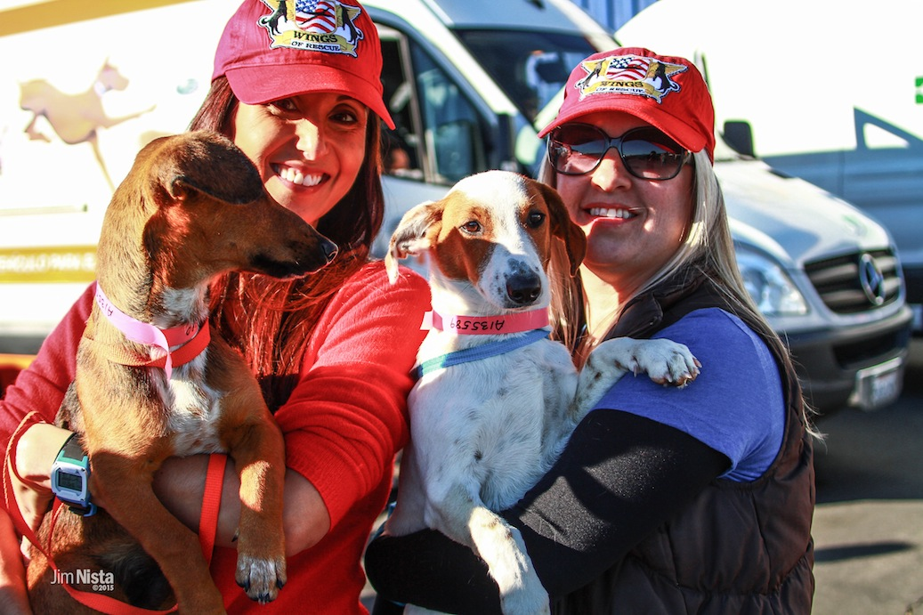 Wings of Rescue flies 250 dogs and cats to freedom in Seattle, #BTC4A