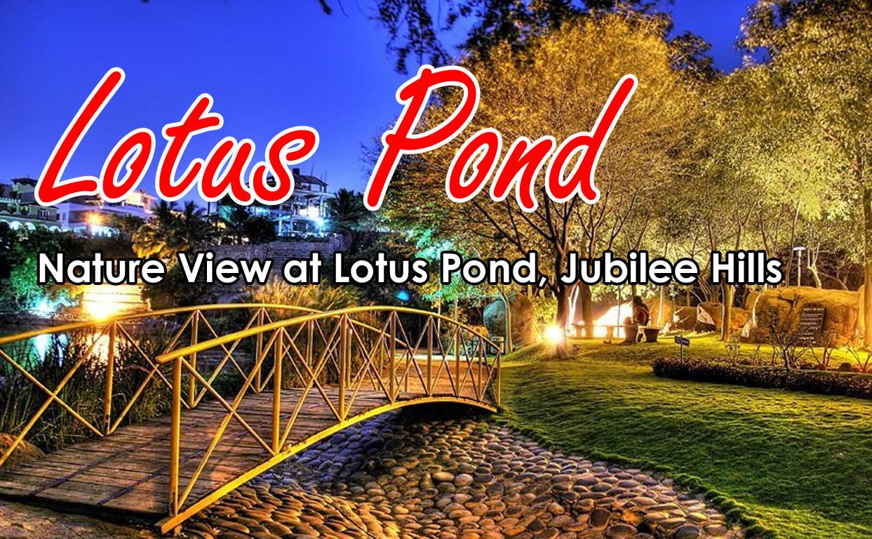Lotus Pond In Jubilee Hills Near Jagan House Hyderabad