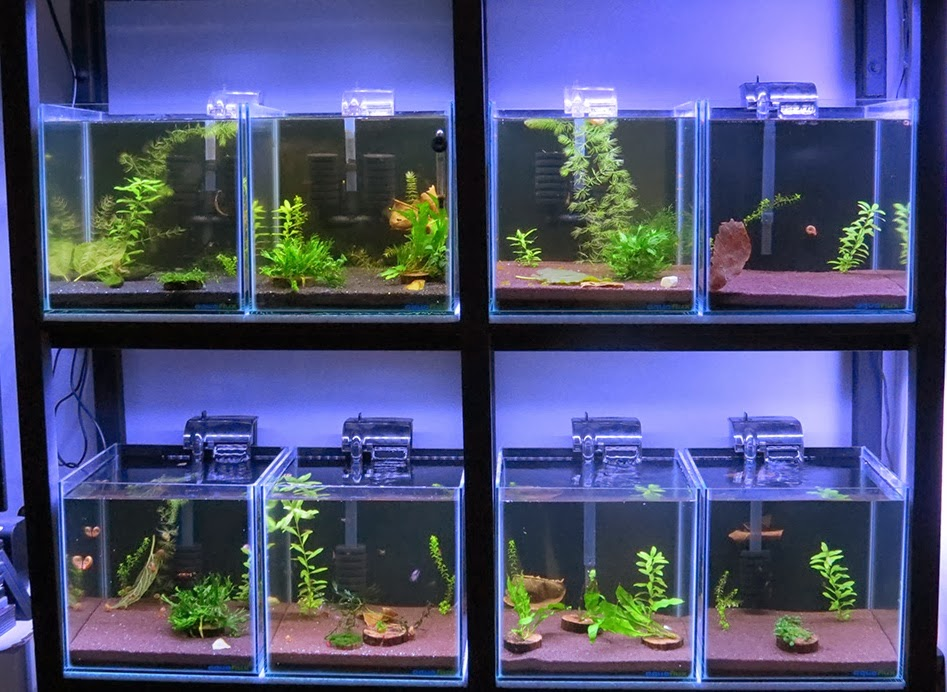 All About Betta Fish Partitioned Betta Fish Tank Setup
