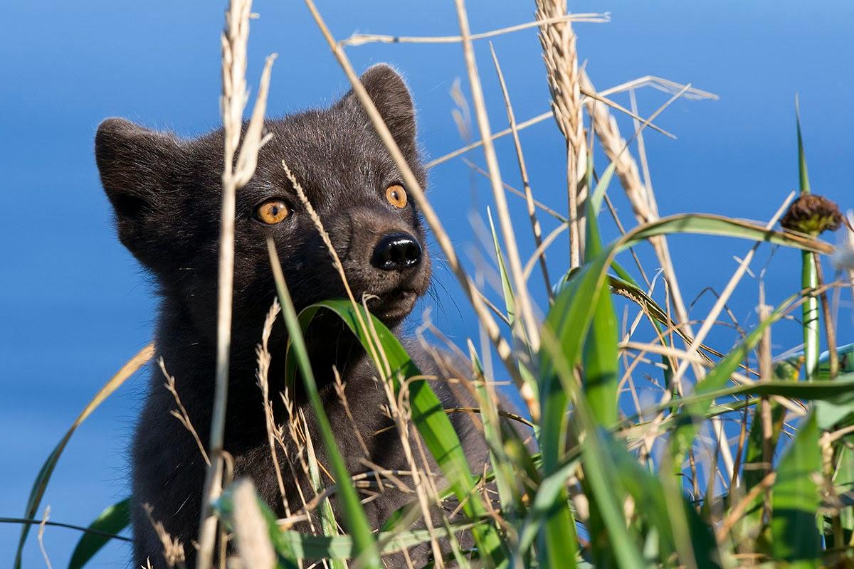 kamtschatka unterwegs in russlands fernem osten geschichte und geschichten von menschen tieren vulkanen und geysiren