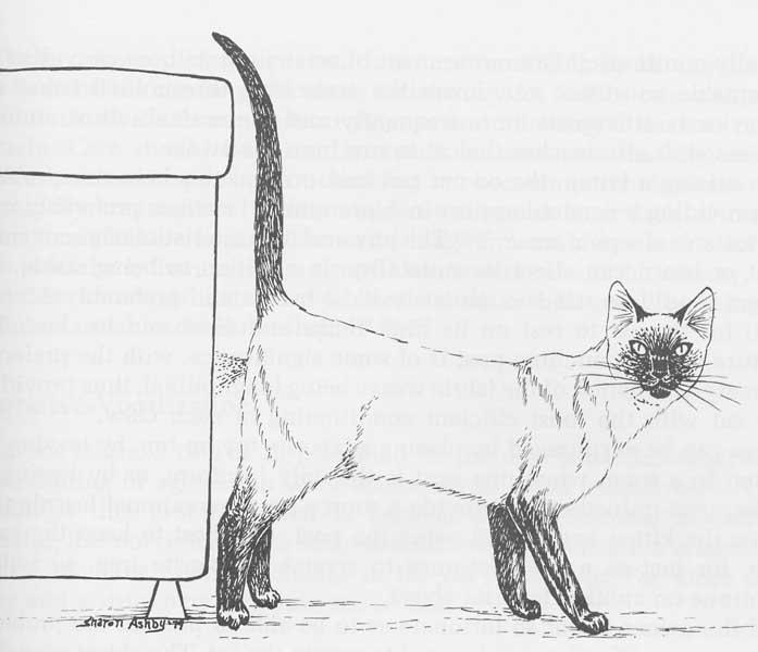 Female Cat Spraying Problem