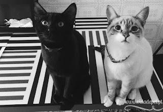 Killy + o gato surpresa + gaiola de pássaro + vida de pet + blogue português de animais de estimação + portugal + pedro e telma