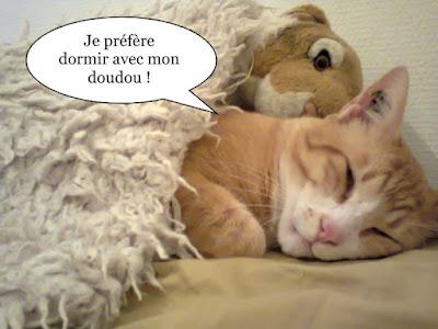 Beau chat couleur crème du chat libre de toulouse.