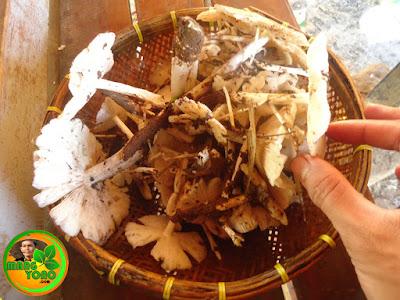 Vidio : Cara membersihkan jamur barat (supa su'ung bulan)