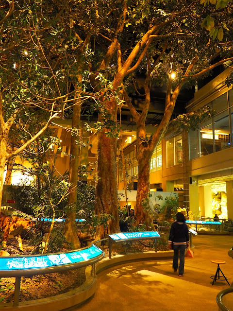 Forest exhibit about Hong Kong's geography | Hong Kong Museum of History