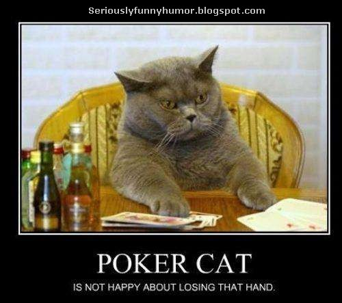 poker-cat-not-happy-about-losing-that-hand