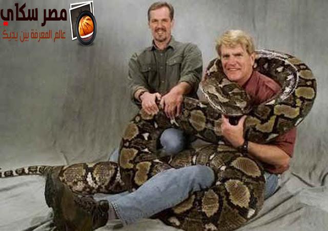 ماذا تعرف عن الأناكوندا و العاصرات أكبر ثعابين العالم Anaconda؟
