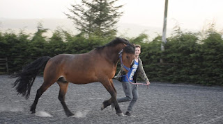 A bay horse cantering along beside a person